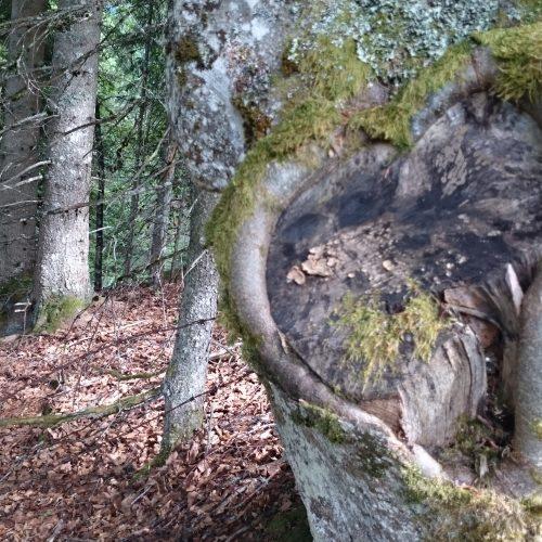 Natur (3)